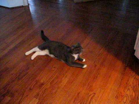 Dead kitty cat trick