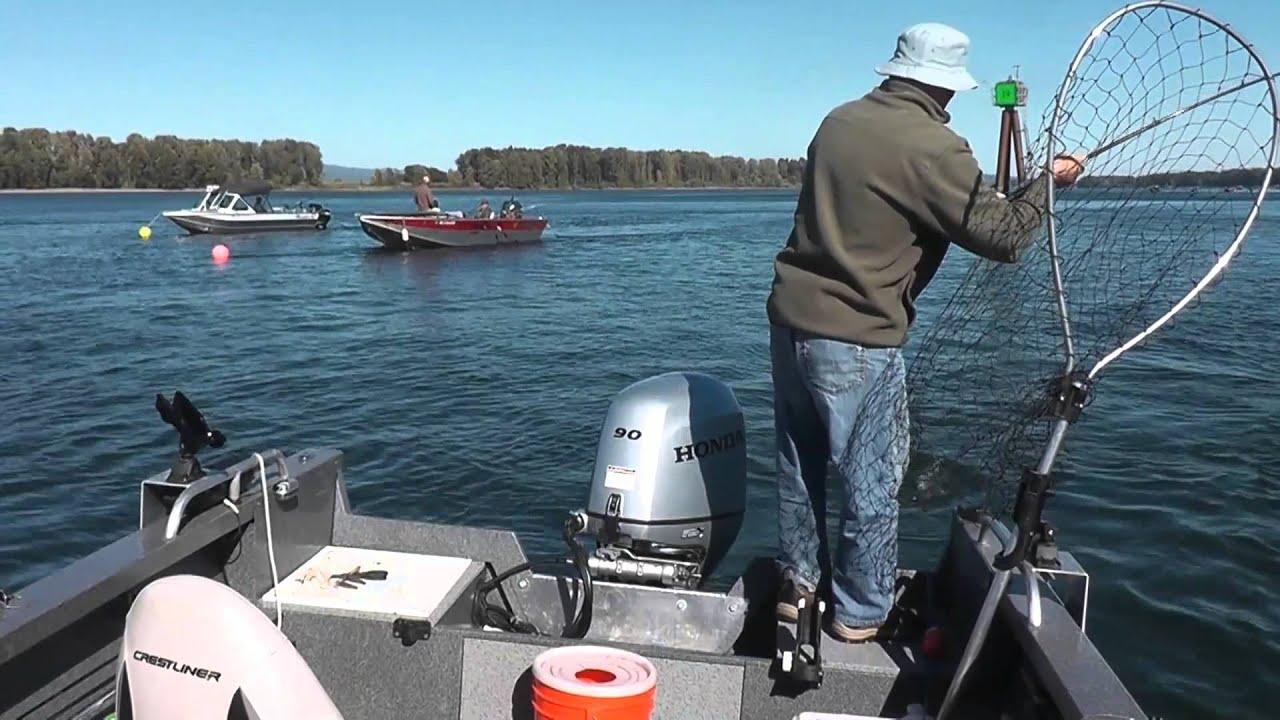 Columbia river salmon fishing 2014 youtube for Columbia river fish counts