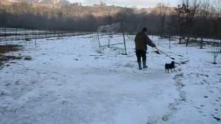 Border Terrier Eddie (iason Hunter Krisbark) 8 Mesiacov