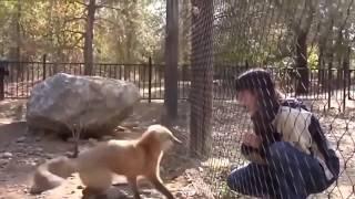 смешные приколы про животных 2017