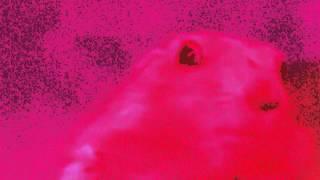 LSD HAMSTER (10 Minuten Version) [ORIGINAL]