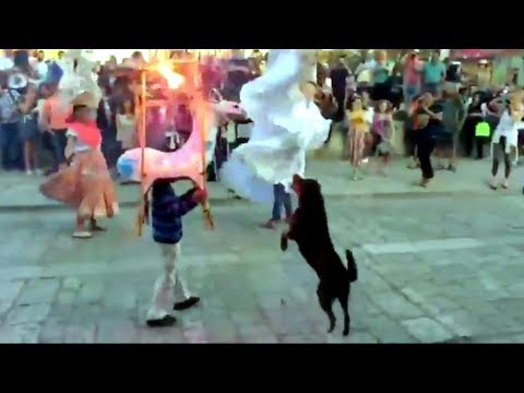 Viral: Dancing Street Dog Steals Spotlight at Mexican Wedding Parade