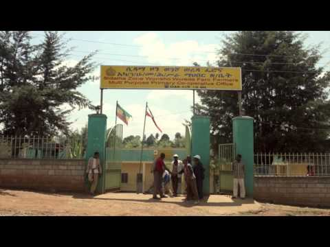 50 Years Of ACDI/VOCA: Developing The Coffee Sector In Ethiopia