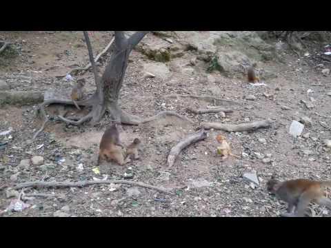 Leucistic baby monkey has developed a good climbing skill
