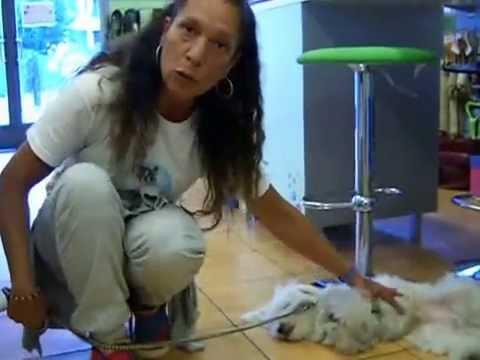Prima di fare il bagno al cane tutorial youtube - Fare il bagno al cane dopo mangiato ...
