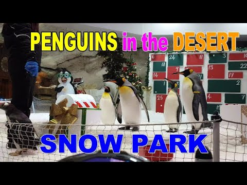 PENGUINS LIVING IN THE DESERT || MALL OF EMIRATES || SNOW PARK DUBAI UAE