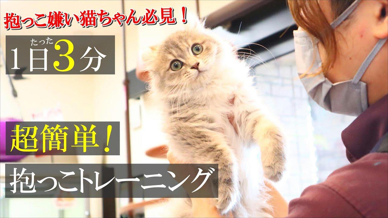 【1日たった3分】これであなたも抱っこマスター!猫の嫌がる抱っこを毎日一緒にトレーニング!