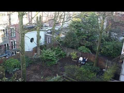 amsterdam green coco mama hostel garden