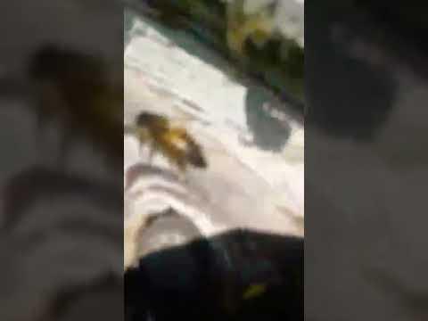 تربية النحل في الجزائر beekeeping Algeria