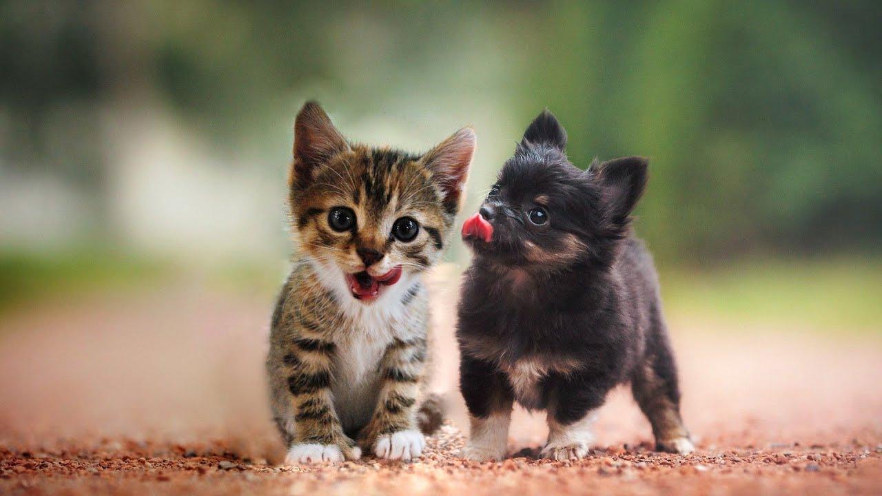 Трогательные истории дружбы собак и кошек - YouTube