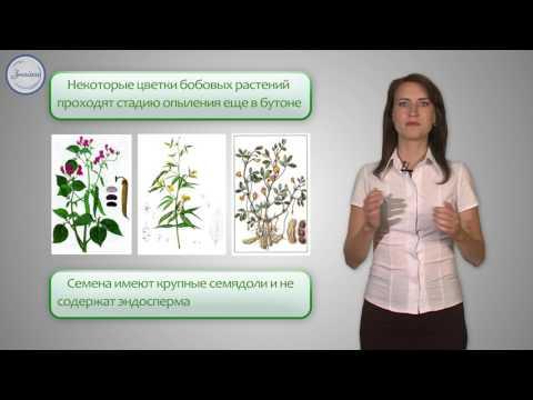 Биология 6 Семейство Мотыльковые Бобовые