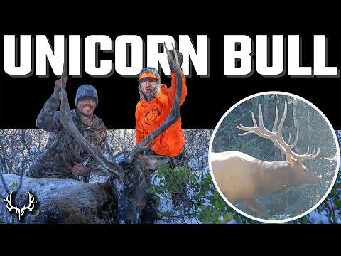Unicorn Bull – A Late Season Limited Entry Utah Elk Hunt