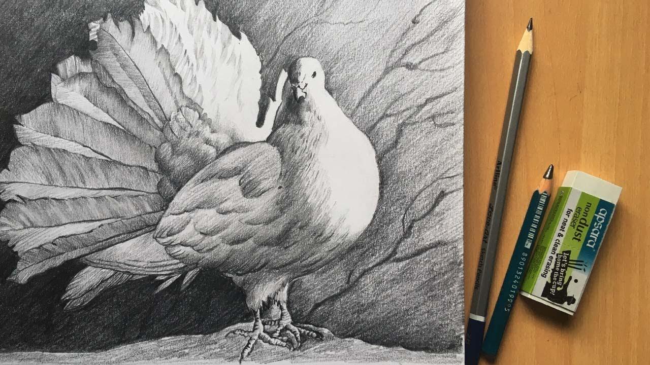 Pigeon Drawing   Pencil Sketch   Pencil Drawing   Bird Drawing