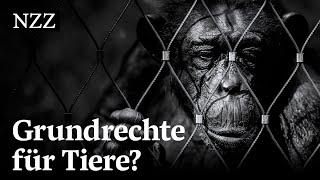 Affe, Elefant, Mastschwein: Was wäre, wenn auch Tiere Grundrechte hätten?