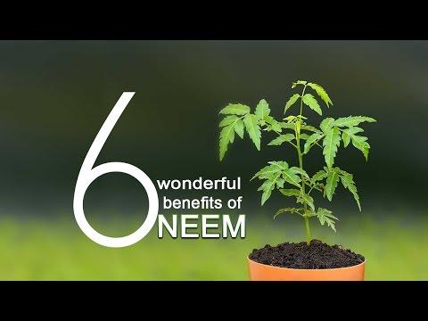 6 Wonderful Benefits of Neem || Herbal Supplements by Herbalvaid