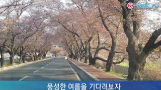 벚꽃계절은 가고  !(19.04.08) ! 오늘만이 내 세상