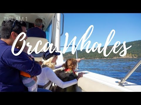 We see orca whales ! I San Juan Island I Travel Diary #1 The Family To The Fullest