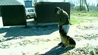 Собака выбегает за ворота - сложный этап дрессировки