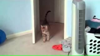 Смешной испуг кота, кот испугался, смешное видео с котом прикол с кошкой приколы 2014, ghbrjks