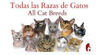 Todas las Razas de Gatos de la A a la Z (All Cat Breeds)
