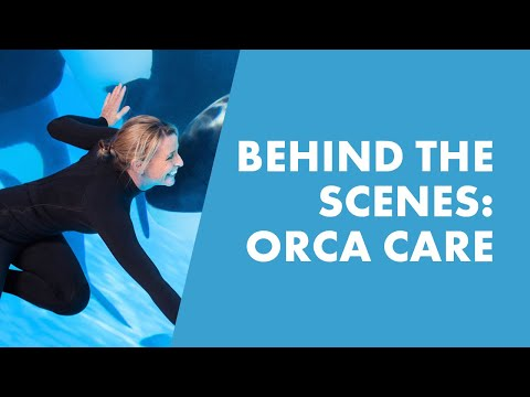 Go Behind The Scenes With SeaWorld Trainers And Learn How We Care For Orcas