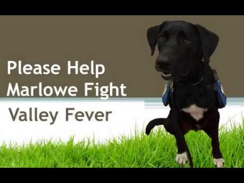 Please Help Marlowe Fight Valley Fever in a Dog