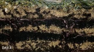Worms At Work   20 Days Time Lapse Of Vermicomposting - Minhocas trabalhando em Vermicompostagem