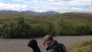 Denali National Park Alaska with Athabaskan tour guide Aug 13