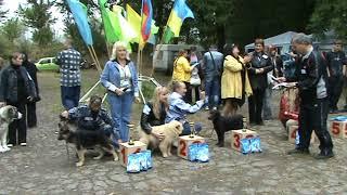 БЭСТ БЭБИ расстановка на выставке собак в Луганске 14.09.2008 год.
