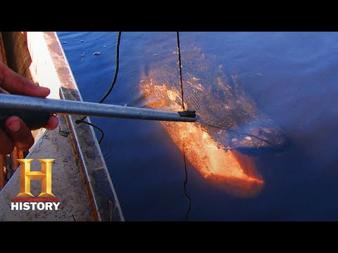 Swamp People: Daniel Tags 13-Foot Gator Nemesis Grand Noir (Season 8) | History