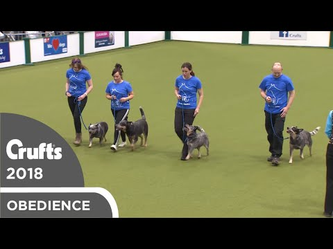 Obreedience - The Blue Heelers | Crufts 2018