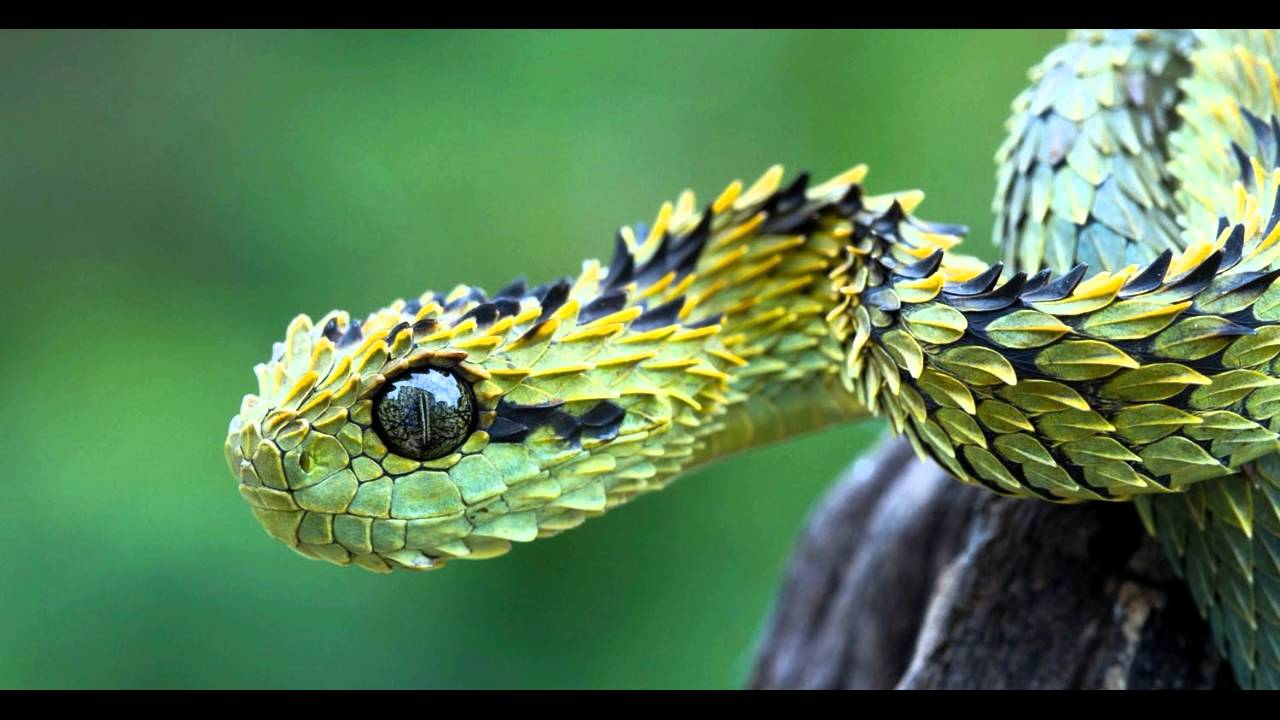 Deadly New Snake Species Discovered In South America