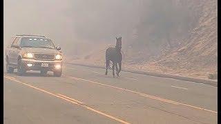 Horse runs for its life in bid to escape California wildfire