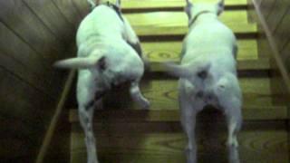 ももこ(右)、あんこ(左)が仲良く、階段を昇っていきます。途中で、...