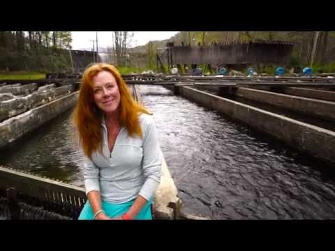 Sally Eason: Trout Farmer