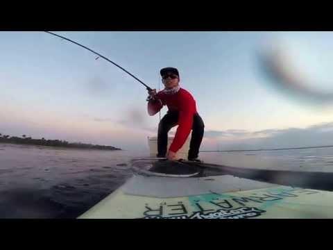 Sight fishing black drum in Merritt island florida