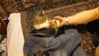 кот в штанах 1