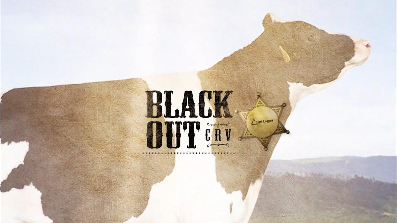 BLACKOUT CRV LAGOA - Melhores touros da bateria Leite Europeu -