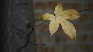 The Last Leaf - A parable of Easter (Part 1)