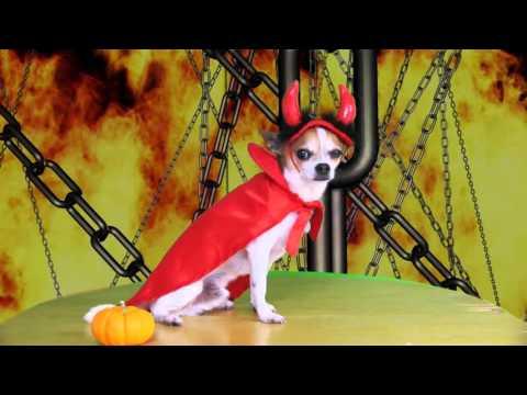 HALLOWEEN DOG COSTUMES | NIC AND PANCHO
