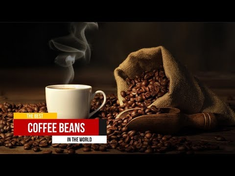 Check This Out! The Best Coffee Beans in the World - YouTube