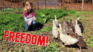 How Did They React to Freedom?!?! (Goslings & Ducklings)