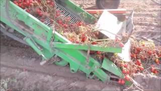 Mechaniczny zbiór pomidora kombajnem zaczepianym