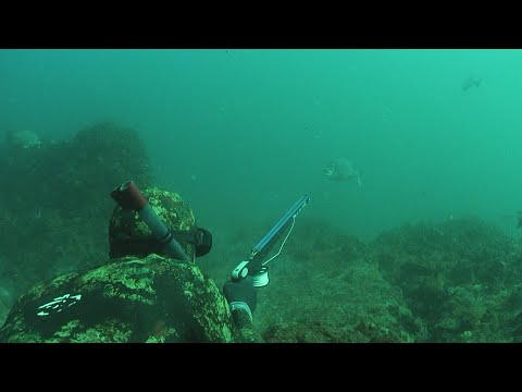 Spearfishing South Africa - ASD