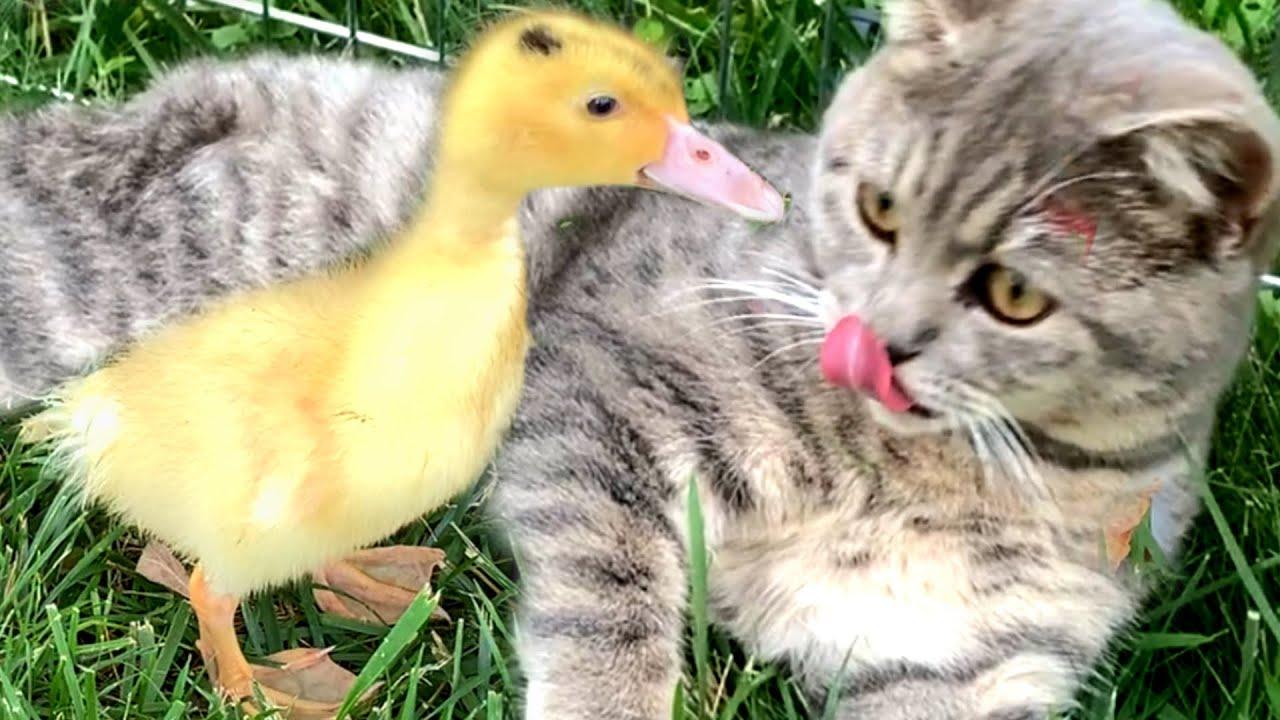 """Do you really think I came to rescue you?"" - Kitten Street and Duckling"
