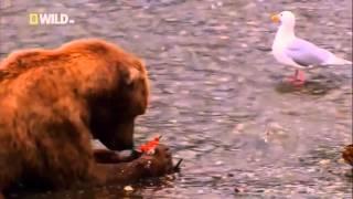 Cамые Cтранные в Мире Животные   Чудаки в Небе  Документальный Фильм National Geographic