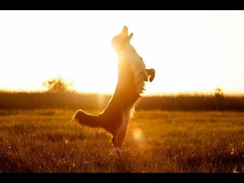 Trick & Training on Usedom   Australian Shepherd Romy