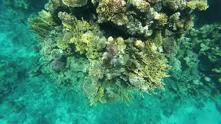 Snorkeling Reefs Hilton Sharks bay Red sea Egypt