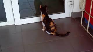 Котик картинка