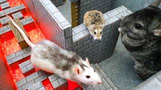 ANIMALS RACE through MINECRAFT WORLD